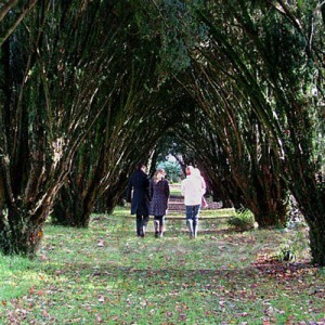 Stroll the Yew Walk on the Lisnavagh Estate, where you can plant a tree in Ireland.